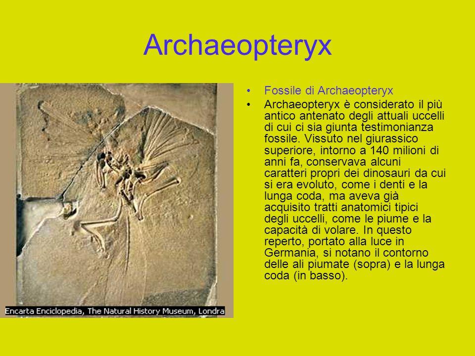 Pterosauro Pterosauro Vissuto fra il Triassico e il Cretaceo, lo pterosauro fu il primo vertebrato a mettere in atto un sistema di volo.