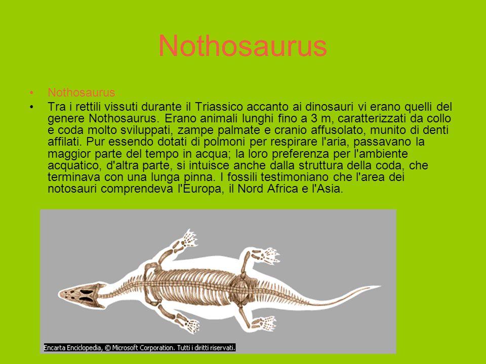 Archaeopteryx Fossile di Archaeopteryx Archaeopteryx è considerato il più antico antenato degli attuali uccelli di cui ci sia giunta testimonianza fossile.