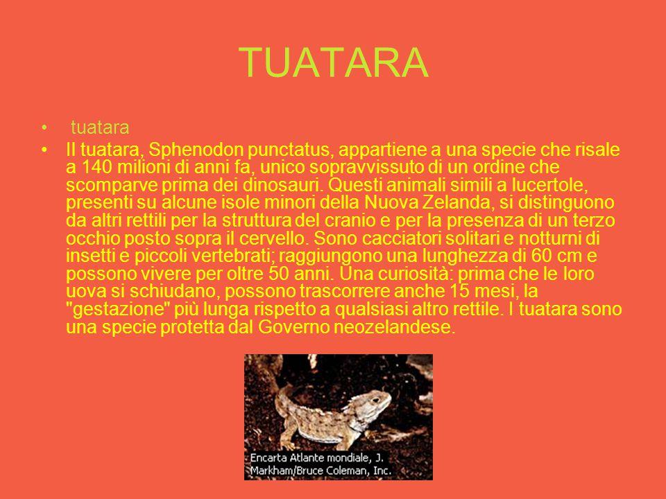 Triceratopos Triceratops Triceratops era dotato di un becco aguzzo che utilizzava per tagliare i vegetali di cui si nutriva, e aveva denti posteriori che gli consentivano di masticare facilmente le foglie tenere.