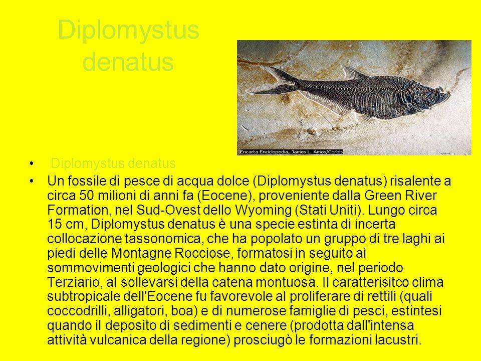 TUATARA tuatara Il tuatara, Sphenodon punctatus, appartiene a una specie che risale a 140 milioni di anni fa, unico sopravvissuto di un ordine che scomparve prima dei dinosauri.