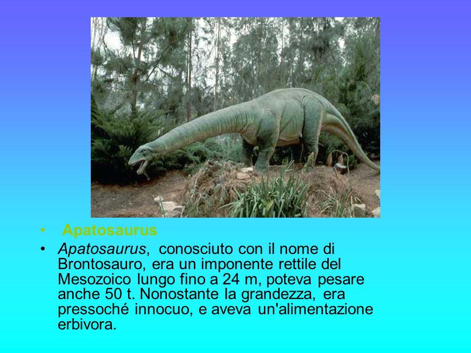 Apatosaurus Apatosaurus, conosciuto con il nome di Brontosauro, era un imponente rettile del Mesozoico lungo fino a 24 m, poteva pesare anche 50 t.