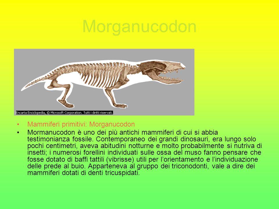Compsognathus Scheletro di Compsognathus Questo scheletro non completamente fossilizzato apparteneva a un esemplare di Compsognathus, un dinosauro predatore di piccola taglia.