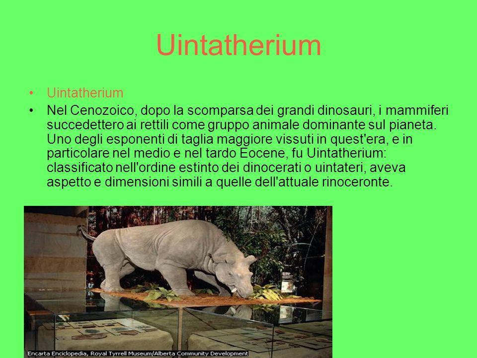 Morganucodon Mammiferi primitivi: Morganucodon Mormanucodon è uno dei più antichi mammiferi di cui si abbia testimonianza fossile.