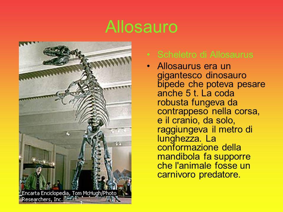 L'Eoraptor lunensis L'Eoraptor lunensis :era un piccolo dinosauro che viveva nei territori corrispondenti all'attuale Argentina, circa 230 milioni di anni fa nel periodo del Triassico.