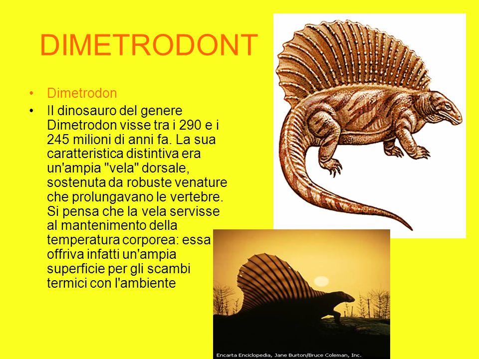 DIMETRODONT Dimetrodon Il dinosauro del genere Dimetrodon visse tra i 290 e i 245 milioni di anni fa.