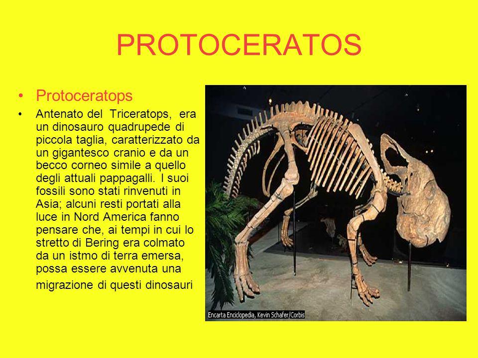 PROTOCERATOS Protoceratops Antenato del Triceratops, era un dinosauro quadrupede di piccola taglia, caratterizzato da un gigantesco cranio e da un becco corneo simile a quello degli attuali pappagalli.