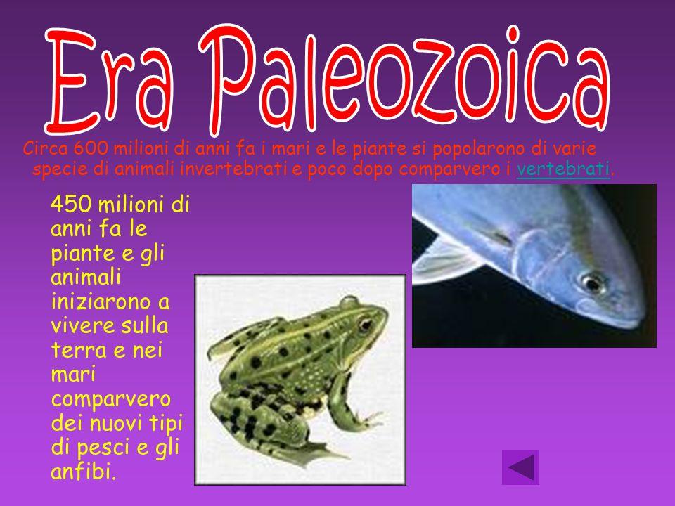 Circa 600 milioni di anni fa i mari e le piante si popolarono di varie specie di animali invertebrati e poco dopo comparvero i vertebrati.vertebrati 4