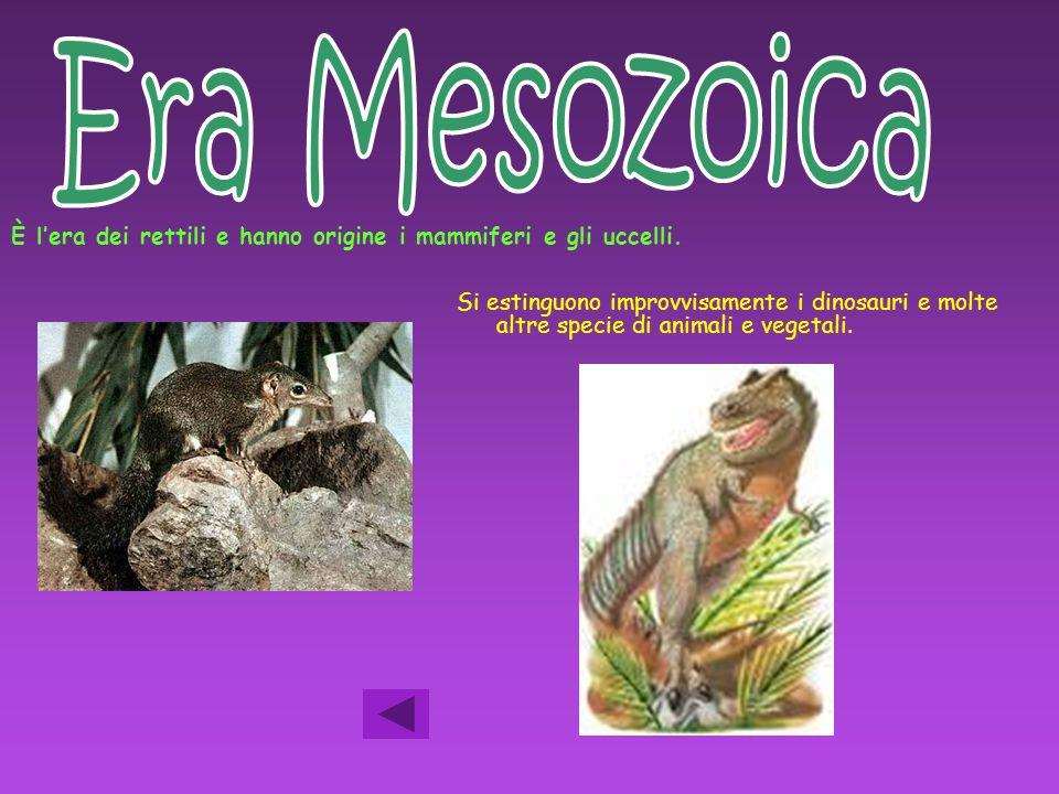 È l'era dei rettili e hanno origine i mammiferi e gli uccelli. Si estinguono improvvisamente i dinosauri e molte altre specie di animali e vegetali.