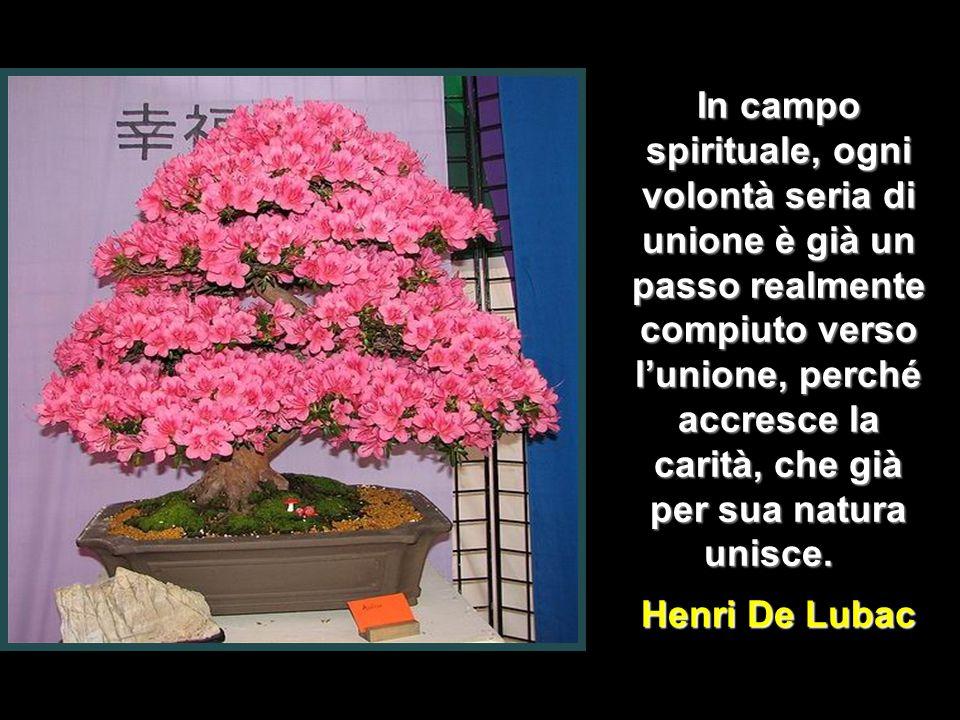 Bisogna abbandonare il passato alla misericordia di Dio, il presente alla nostra fedeltà e il futuro alla Divina Provvidenza.