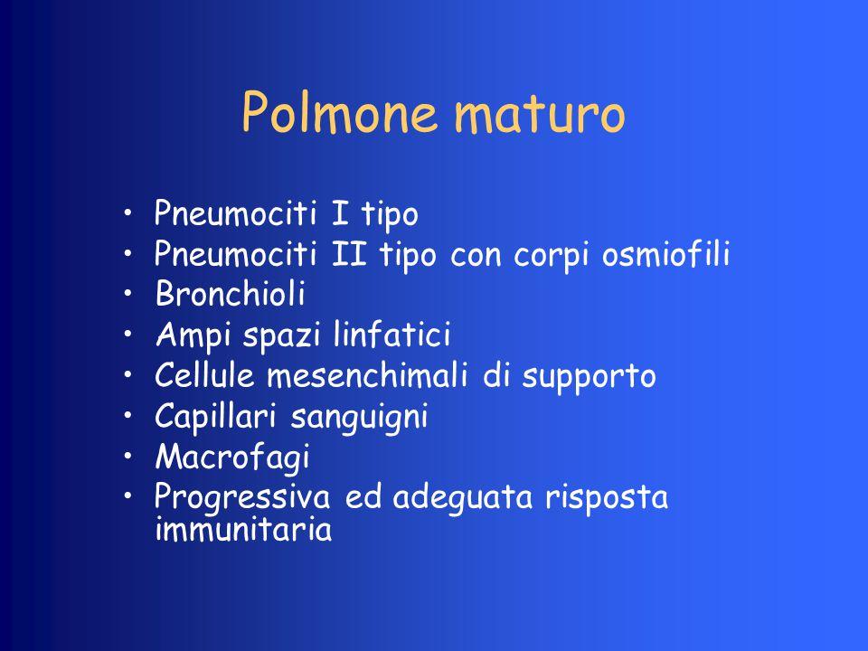 Polmone maturo Pneumociti I tipo Pneumociti II tipo con corpi osmiofili Bronchioli Ampi spazi linfatici Cellule mesenchimali di supporto Capillari san