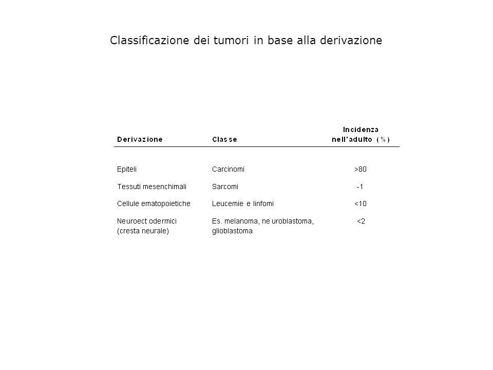 Classificazione dei tumori in base alla derivazione