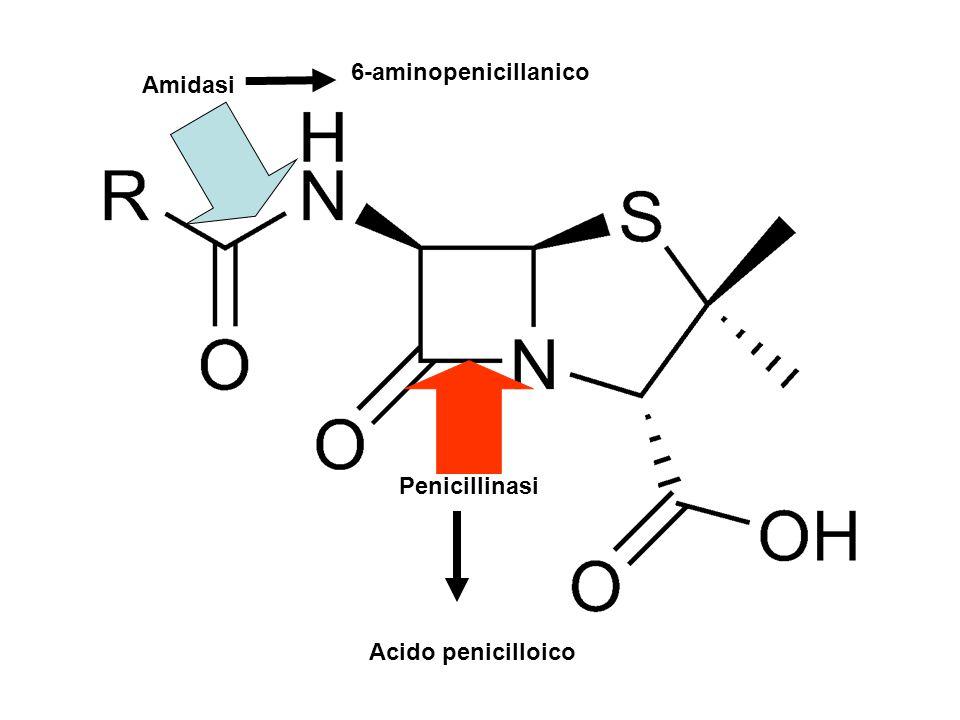 Penicillinasi Amidasi 6-aminopenicillanico Acido penicilloico