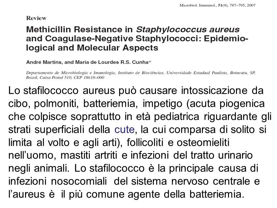 Lo stafilococco aureus può causare intossicazione da cibo, polmoniti, batteriemia, impetigo (acuta piogenica che colpisce soprattutto in età pediatric