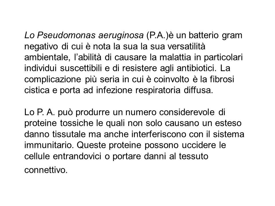 Lo Pseudomonas aeruginosa (P.A.)è un batterio gram negativo di cui è nota la sua la sua versatilità ambientale, l'abilità di causare la malattia in pa