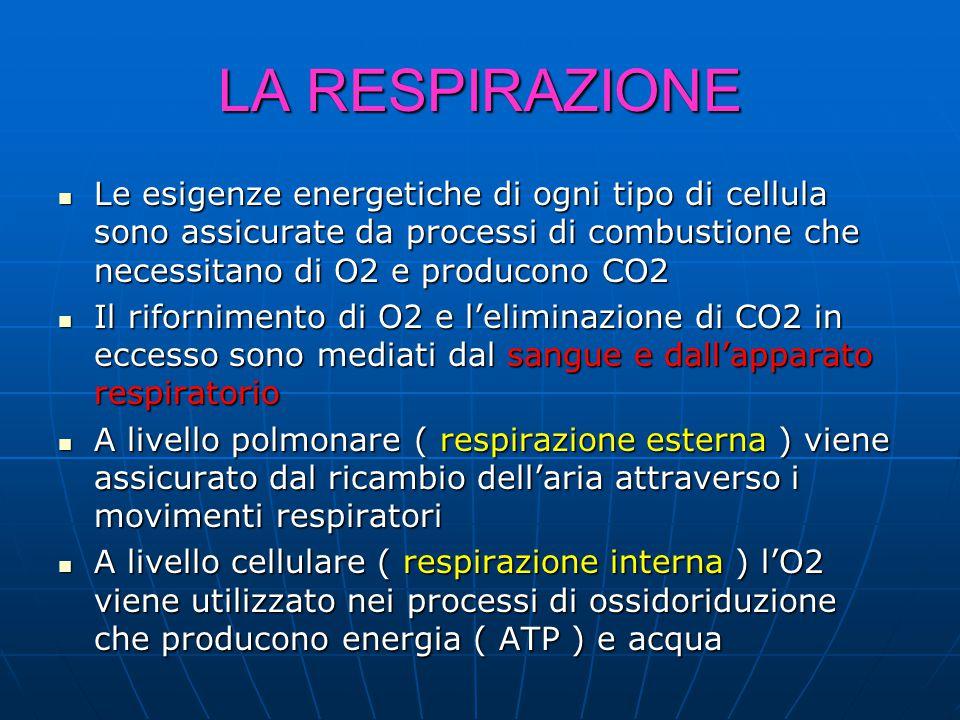 LA RESPIRAZIONE Le esigenze energetiche di ogni tipo di cellula sono assicurate da processi di combustione che necessitano di O2 e producono CO2 Le esigenze energetiche di ogni tipo di cellula sono assicurate da processi di combustione che necessitano di O2 e producono CO2 Il rifornimento di O2 e l'eliminazione di CO2 in eccesso sono mediati dal sangue e dall'apparato respiratorio Il rifornimento di O2 e l'eliminazione di CO2 in eccesso sono mediati dal sangue e dall'apparato respiratorio A livello polmonare ( respirazione esterna ) viene assicurato dal ricambio dell'aria attraverso i movimenti respiratori A livello polmonare ( respirazione esterna ) viene assicurato dal ricambio dell'aria attraverso i movimenti respiratori A livello cellulare ( respirazione interna ) l'O2 viene utilizzato nei processi di ossidoriduzione che producono energia ( ATP ) e acqua A livello cellulare ( respirazione interna ) l'O2 viene utilizzato nei processi di ossidoriduzione che producono energia ( ATP ) e acqua
