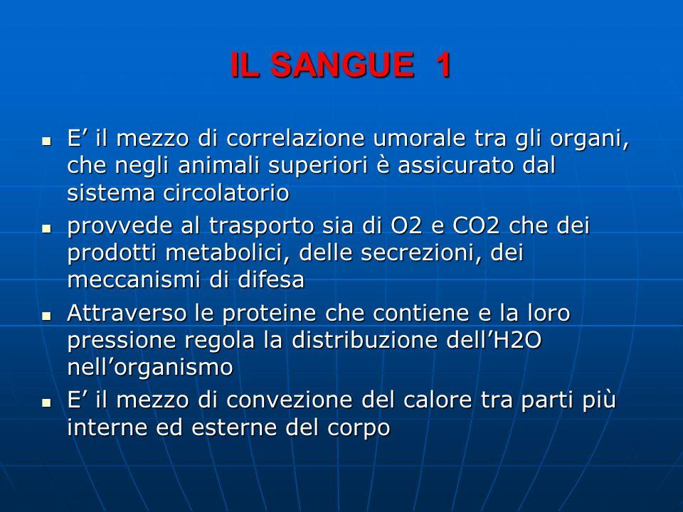 IL SANGUE 1 E' il mezzo di correlazione umorale tra gli organi, che negli animali superiori è assicurato dal sistema circolatorio E' il mezzo di correlazione umorale tra gli organi, che negli animali superiori è assicurato dal sistema circolatorio provvede al trasporto sia di O2 e CO2 che dei prodotti metabolici, delle secrezioni, dei meccanismi di difesa provvede al trasporto sia di O2 e CO2 che dei prodotti metabolici, delle secrezioni, dei meccanismi di difesa Attraverso le proteine che contiene e la loro pressione regola la distribuzione dell'H2O nell'organismo Attraverso le proteine che contiene e la loro pressione regola la distribuzione dell'H2O nell'organismo E' il mezzo di convezione del calore tra parti più interne ed esterne del corpo E' il mezzo di convezione del calore tra parti più interne ed esterne del corpo
