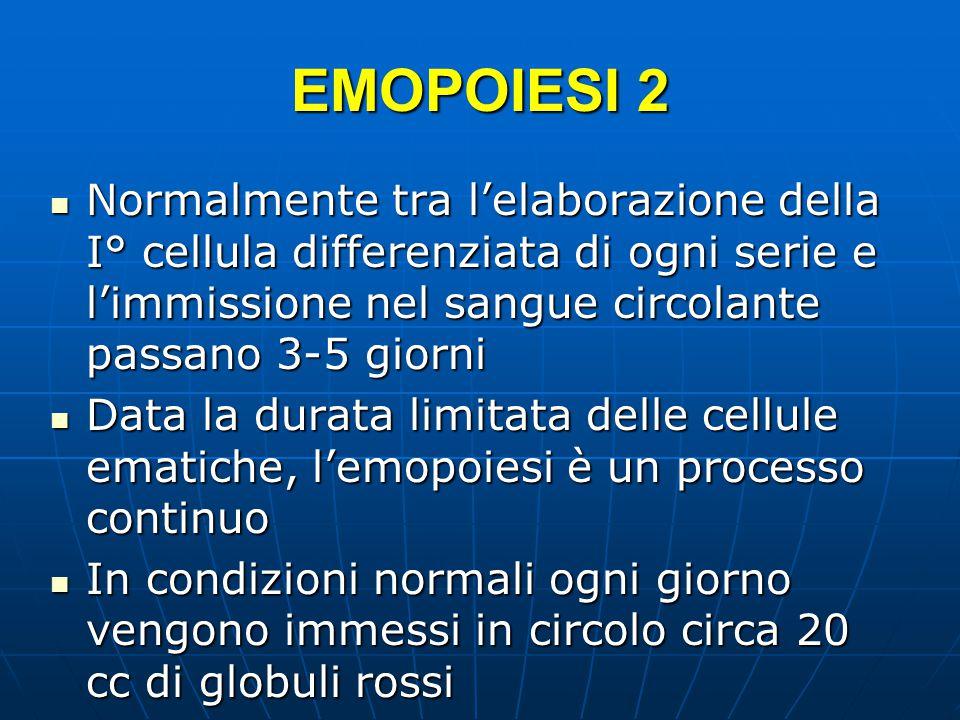 EMOPOIESI 2 Normalmente tra l'elaborazione della I° cellula differenziata di ogni serie e l'immissione nel sangue circolante passano 3-5 giorni Normalmente tra l'elaborazione della I° cellula differenziata di ogni serie e l'immissione nel sangue circolante passano 3-5 giorni Data la durata limitata delle cellule ematiche, l'emopoiesi è un processo continuo Data la durata limitata delle cellule ematiche, l'emopoiesi è un processo continuo In condizioni normali ogni giorno vengono immessi in circolo circa 20 cc di globuli rossi In condizioni normali ogni giorno vengono immessi in circolo circa 20 cc di globuli rossi