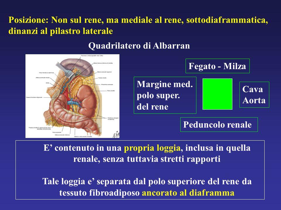 Posizione: Non sul rene, ma mediale al rene, sottodiaframmatica, dinanzi al pilastro laterale Quadrilatero di Albarran Fegato - Milza Margine med.