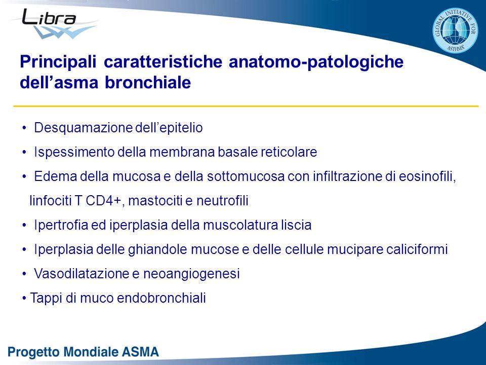 Principali caratteristiche anatomo-patologiche dell'asma bronchiale Desquamazione dell'epitelio Ispessimento della membrana basale reticolare Edema de