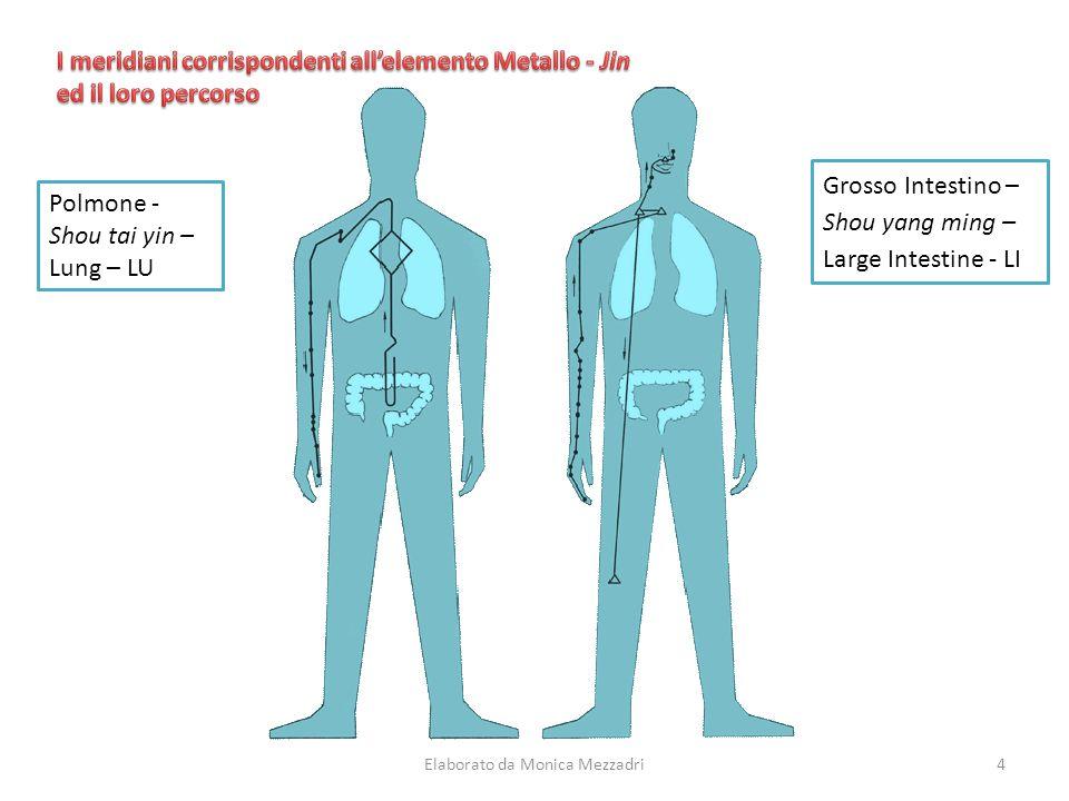 Polmone - Shou tai yin – Lung – LU Grosso Intestino – Shou yang ming – Large Intestine - LI Elaborato da Monica Mezzadri4