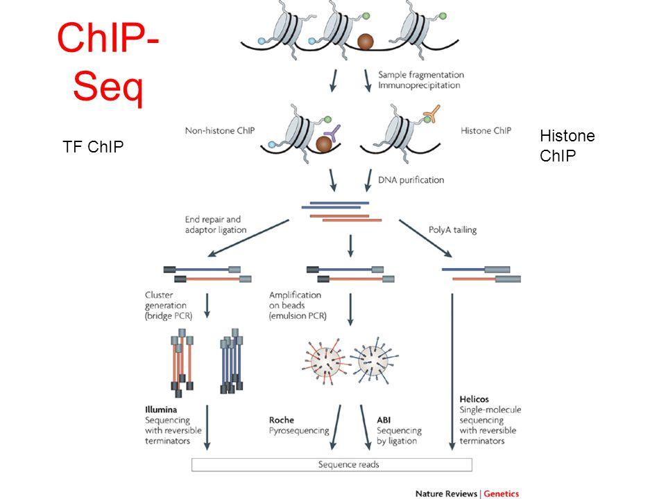 TF ChIP Histone ChIP ChIP- Seq