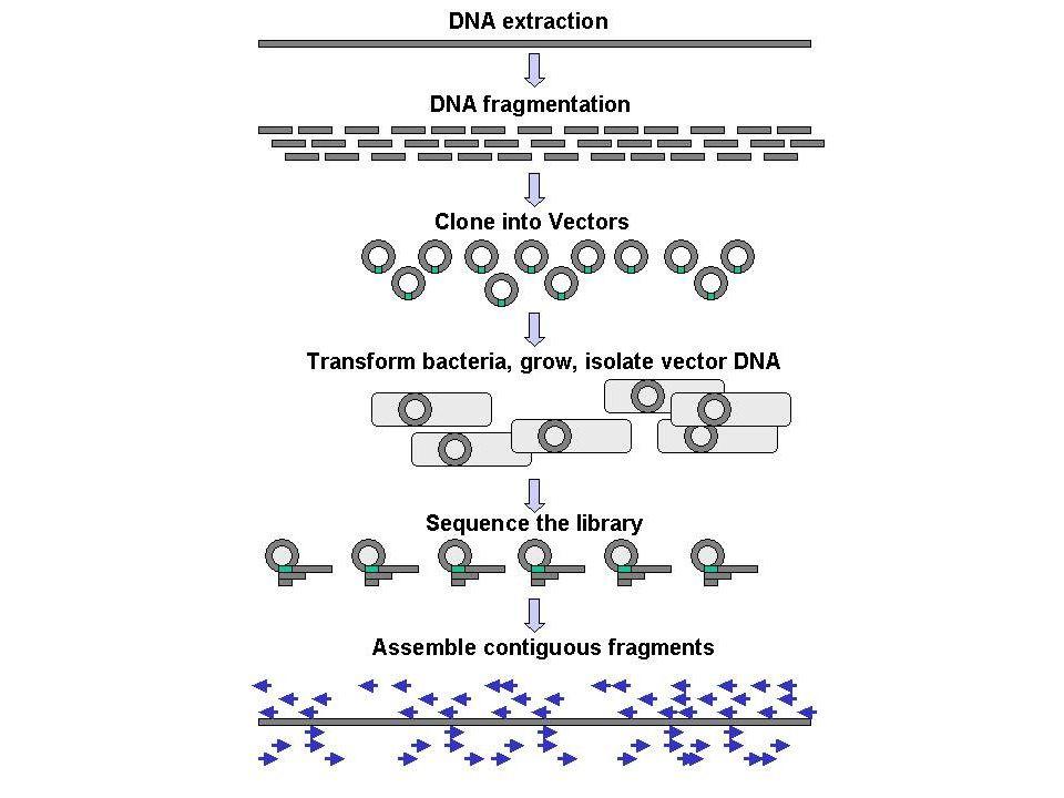 Esperimento ChIP-Seq associata a una particolare modificazione (es, H3K4me3) ChIP-Seq associata a una particolare modificazione (es, H3K4me3) Domanda: la modificazione è correlabile alla trascrizione dei geni.