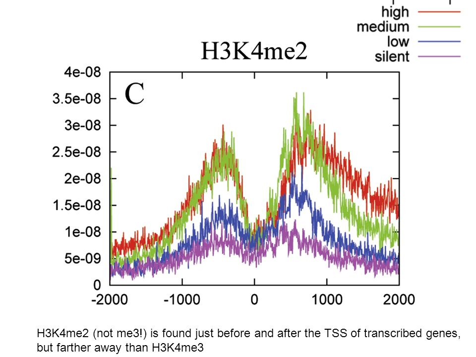 H3K4me2 (not me3!) is found just before and after the TSS of transcribed genes, but farther away than H3K4me3