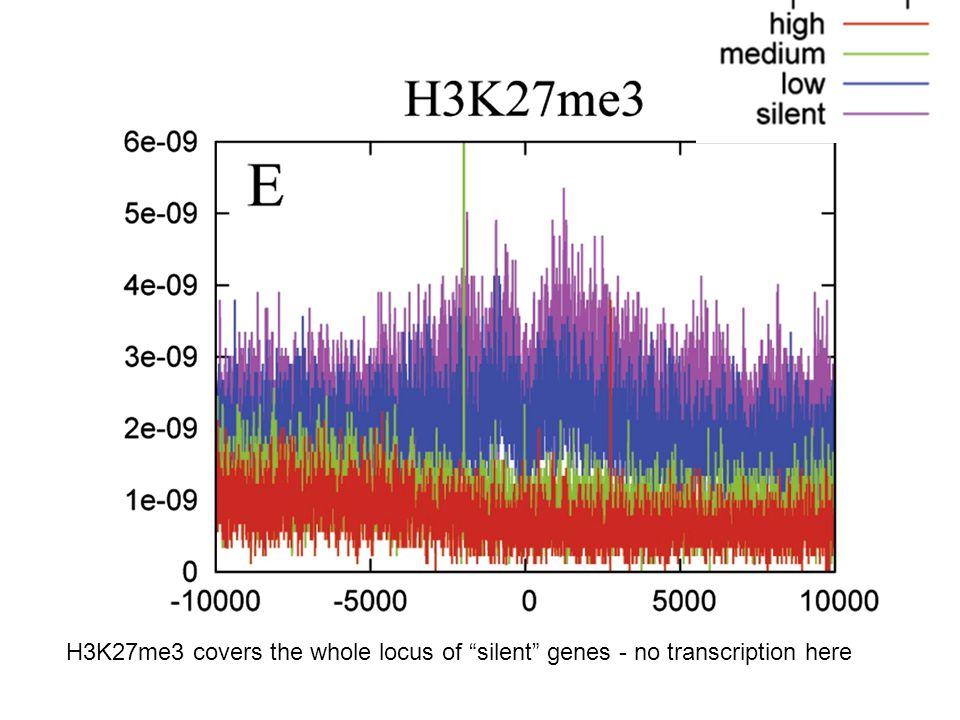 "H3K27me3 covers the whole locus of ""silent"" genes - no transcription here"