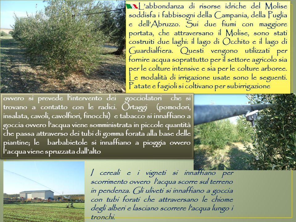 L'abbondanza di risorse idriche del Molise soddisfa i fabbisogni della Campania, della Puglia e dell'Abruzzo.