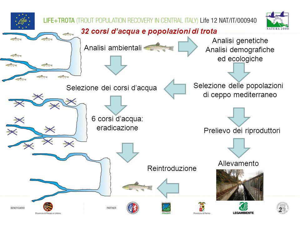2 Analisi genetiche Analisi demografiche ed ecologiche Analisi ambientali 32 corsi d'acqua e popolazioni di trota Selezione delle popolazioni di ceppo mediterraneo Allevamento Selezione dei corsi d'acqua Prelievo dei riproduttori 6 corsi d'acqua: eradicazione Reintroduzione