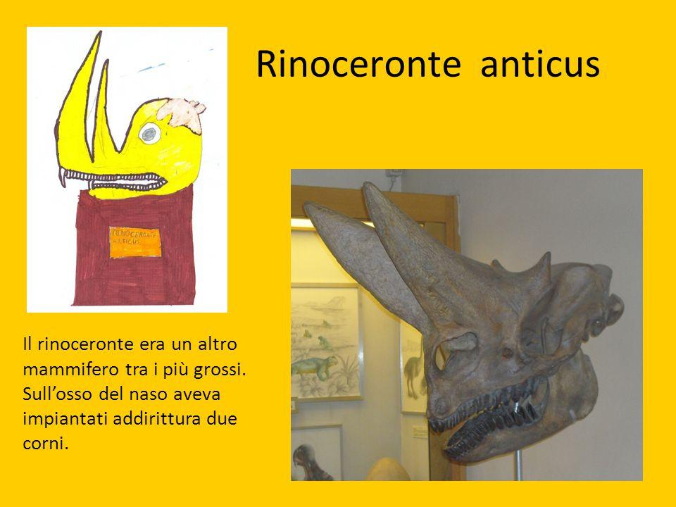 Rinoceronte anticus Il rinoceronte era un altro mammifero tra i più grossi. Sull'osso del naso aveva impiantati addirittura due corni.