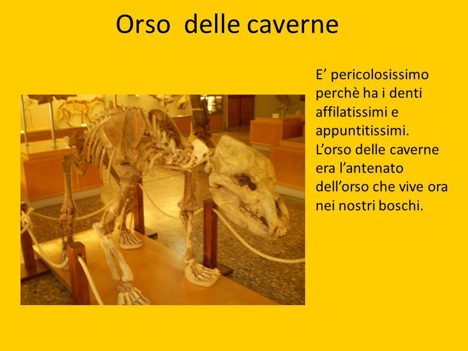 Orso delle caverne E' pericolosissimo perchè ha i denti affilatissimi e appuntitissimi. L'orso delle caverne era l'antenato dell'orso che vive ora nei