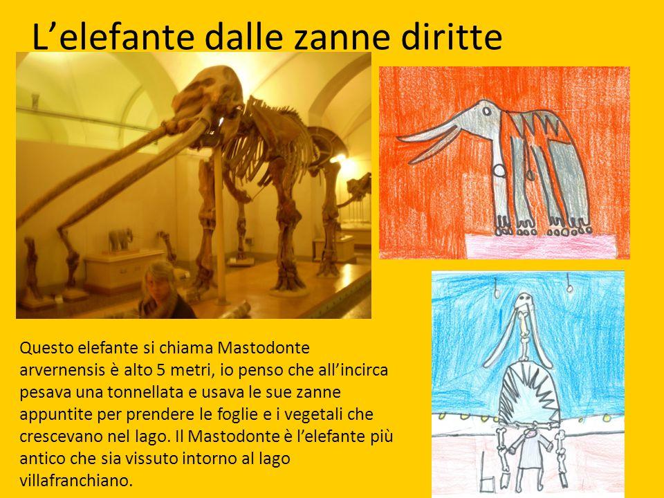 L'elefante dalle zanne diritte Questo elefante si chiama Mastodonte arvernensis è alto 5 metri, io penso che all'incirca pesava una tonnellata e usava
