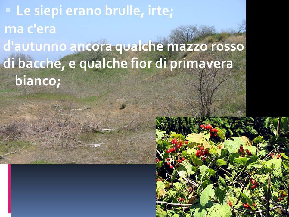  Le siepi erano brulle, irte; ma c'era d'autunno ancora qualche mazzo rosso di bacche, e qualche fior di primavera bianco;