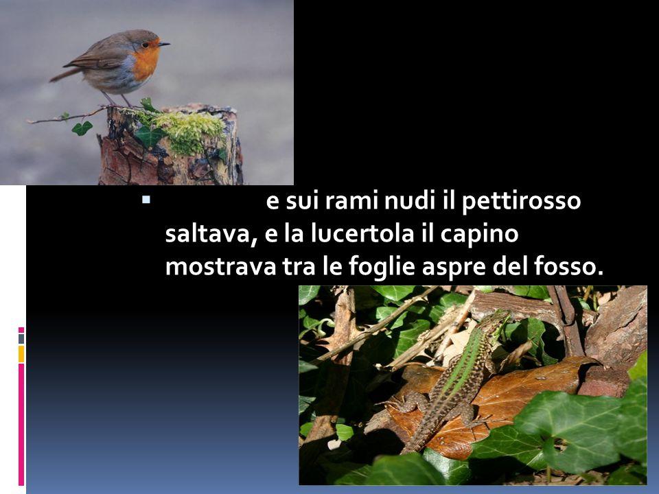  e sui rami nudi il pettirosso saltava, e la lucertola il capino mostrava tra le foglie aspre del fosso.