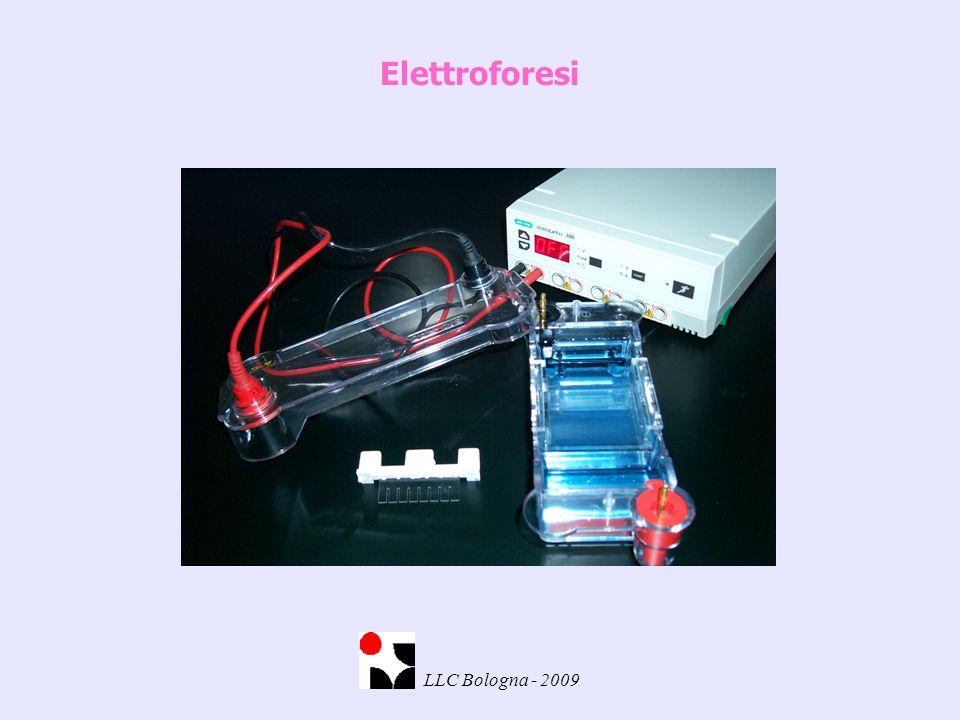 Elettroforesi LLC Bologna - 2009