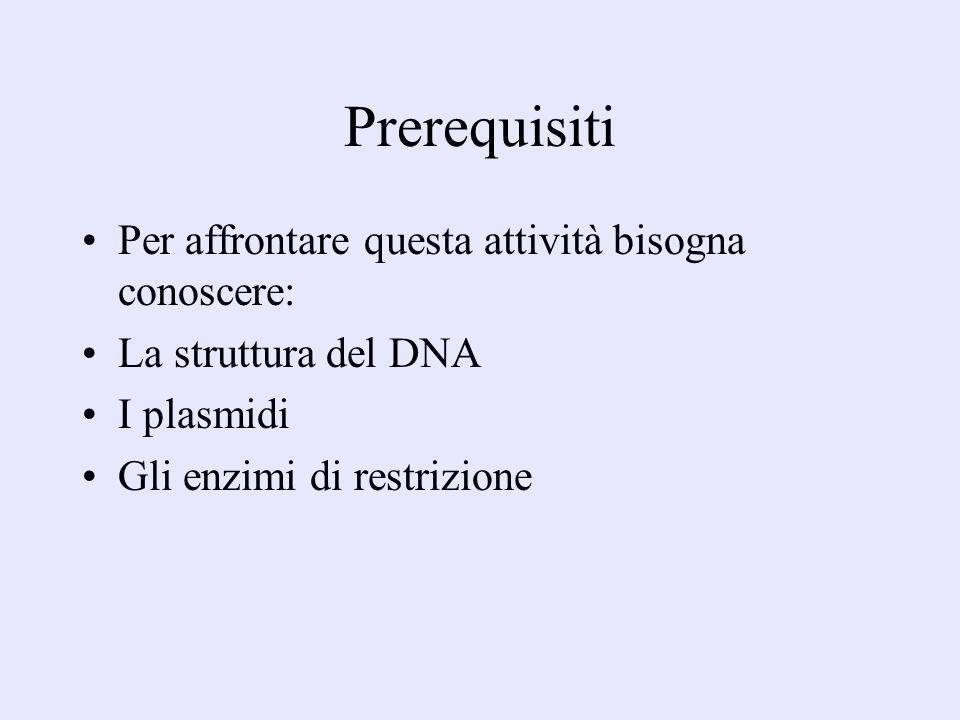 Prerequisiti Per affrontare questa attività bisogna conoscere: La struttura del DNA I plasmidi Gli enzimi di restrizione