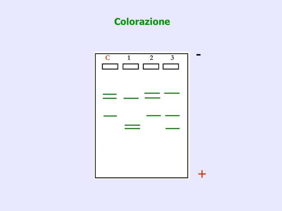 C 1 2 3 - + Colorazione
