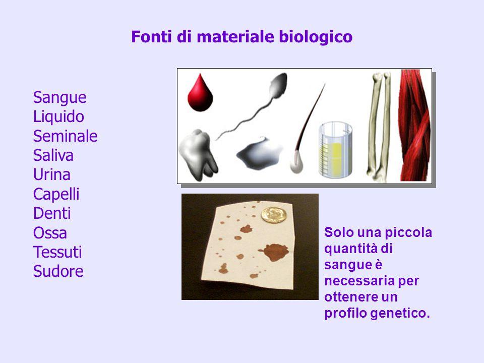 Fonti di materiale biologico Sangue Liquido Seminale Saliva Urina Capelli Denti Ossa Tessuti Sudore Solo una piccola quantità di sangue è necessaria p