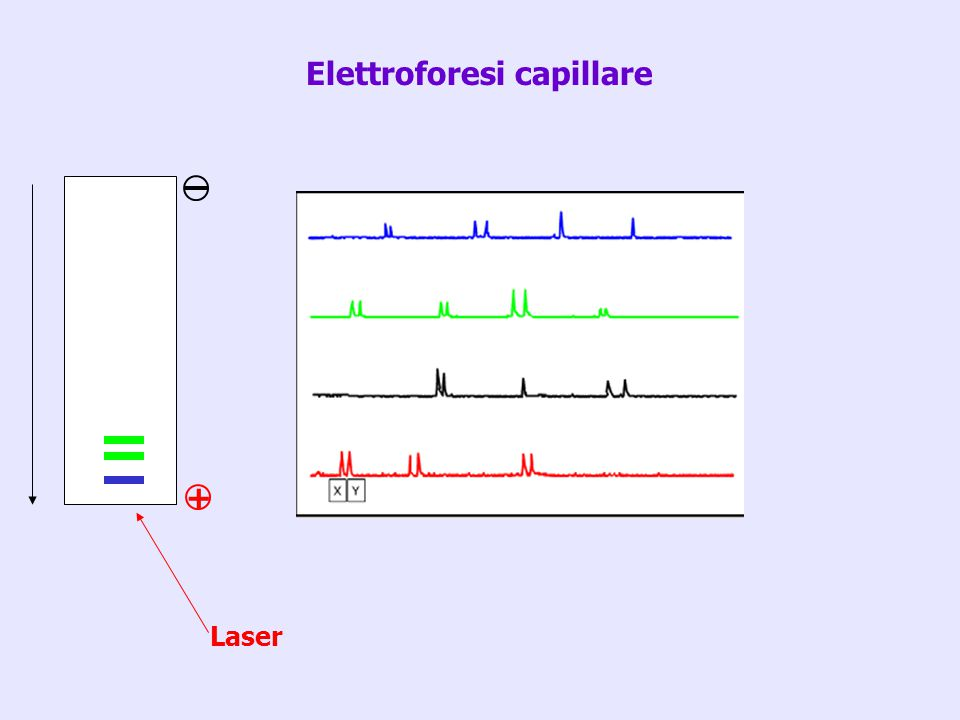 Laser + Elettroforesi capillare
