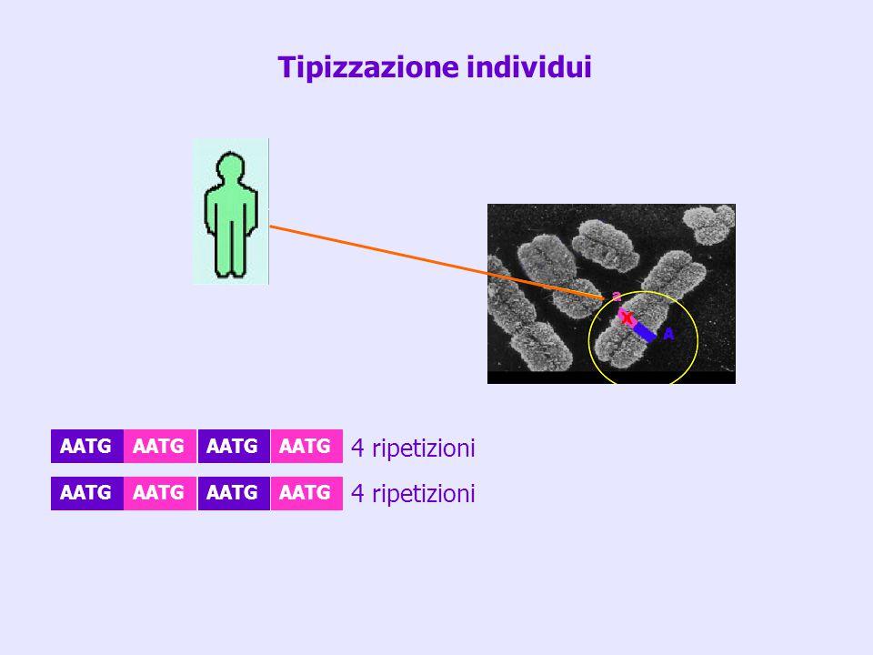 AATG 4 ripetizioni Tipizzazione individui
