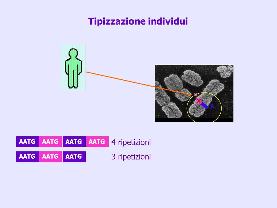 AATG 4 ripetizioni 3 ripetizioni Tipizzazione individui
