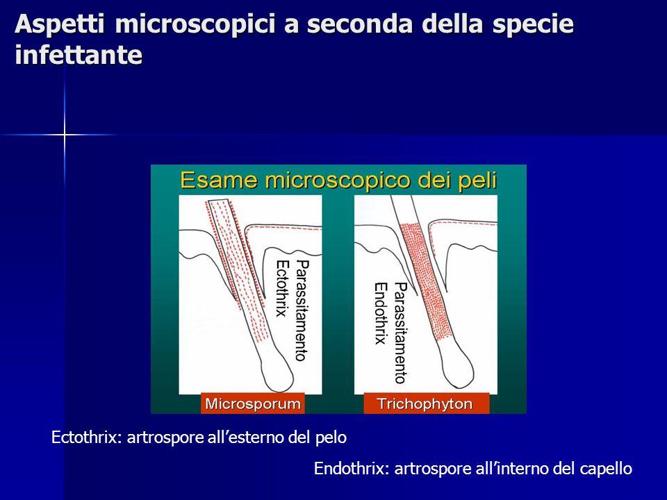 Aspetti microscopici a seconda della specie infettante Ectothrix: artrospore all'esterno del pelo Endothrix: artrospore all'interno del capello