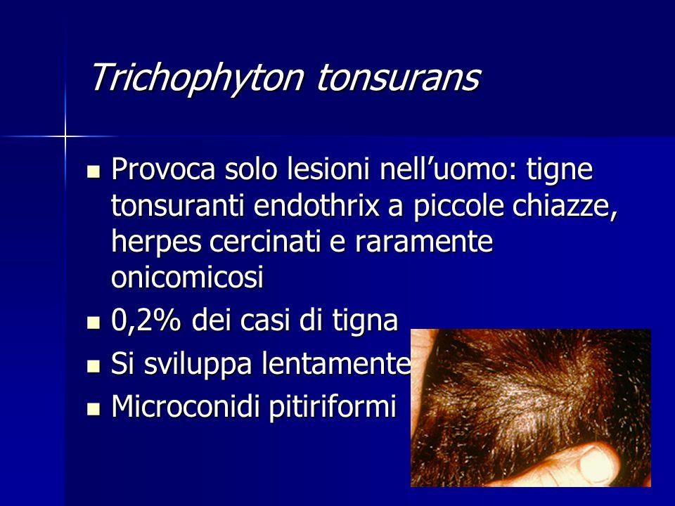 Provoca solo lesioni nell'uomo: tigne tonsuranti endothrix a piccole chiazze, herpes cercinati e raramente onicomicosi Provoca solo lesioni nell'uomo: