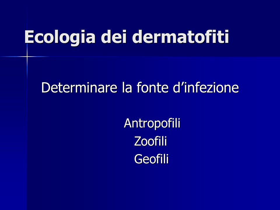Ecologia dei dermatofiti Determinare la fonte d'infezione Antropofili Antropofili Zoofili Zoofili Geofili Geofili