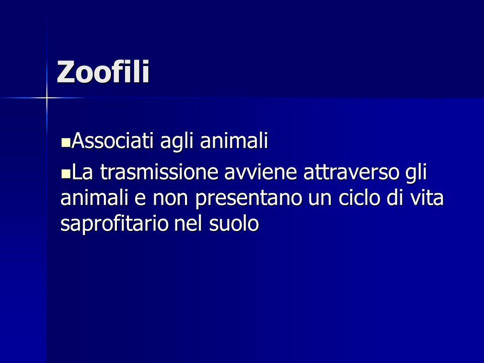 Zoofili Associati agli animali Associati agli animali La trasmissione avviene attraverso gli animali e non presentano un ciclo di vita saprofitario ne