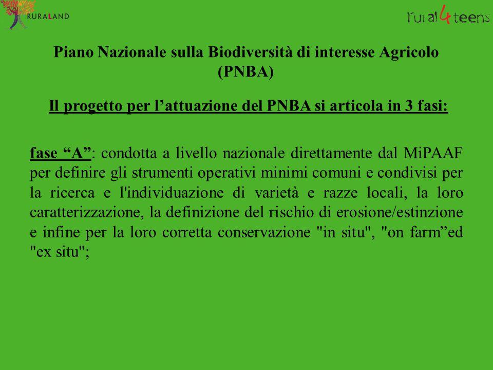 """Piano Nazionale sulla Biodiversità di interesse Agricolo (PNBA) Il progetto per l'attuazione del PNBA si articola in 3 fasi: fase """"A"""": condotta a live"""