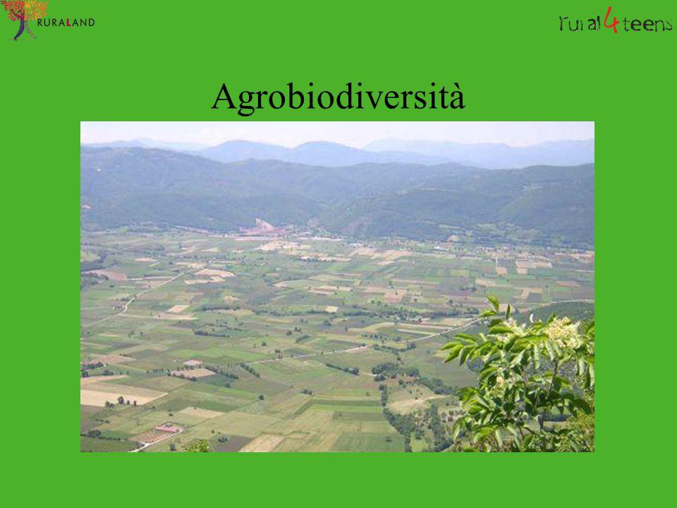 Bovini Piemontese