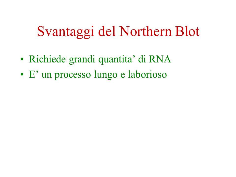 Svantaggi del Northern Blot Richiede grandi quantita' di RNA E' un processo lungo e laborioso