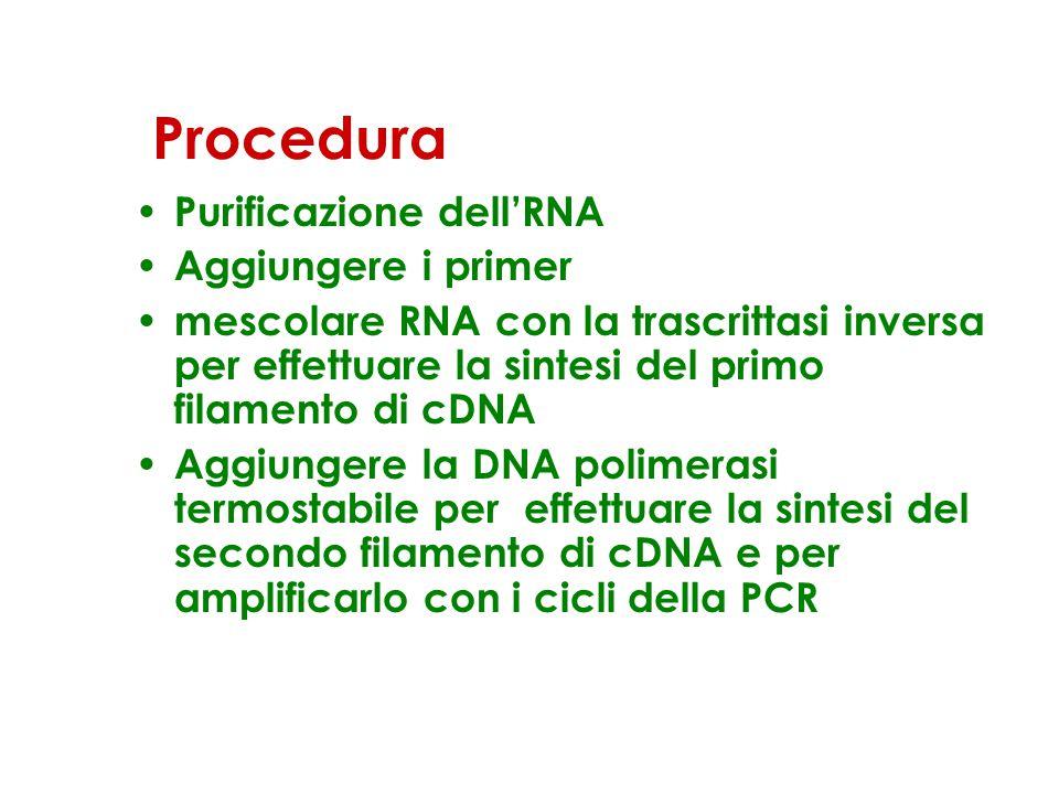 Procedura Purificazione dell'RNA Aggiungere i primer mescolare RNA con la trascrittasi inversa per effettuare la sintesi del primo filamento di cDNA Aggiungere la DNA polimerasi termostabile per effettuare la sintesi del secondo filamento di cDNA e per amplificarlo con i cicli della PCR
